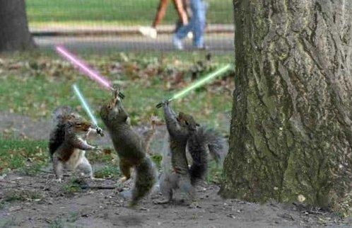 star-wars-squirrels
