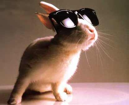 Animals with sunglasses - photo#28